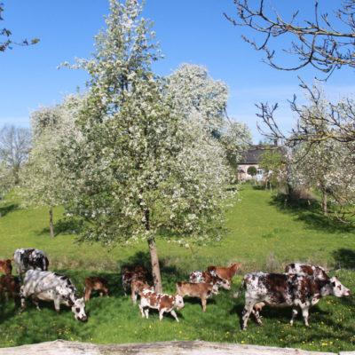 Concerts - Visite de la ferme